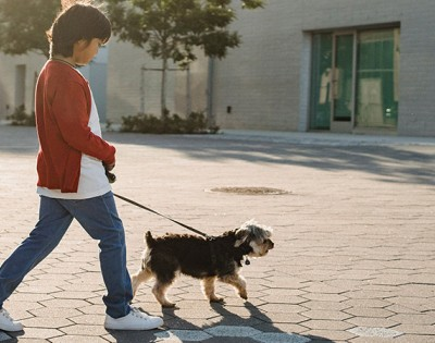 Children and pets, pros and cons